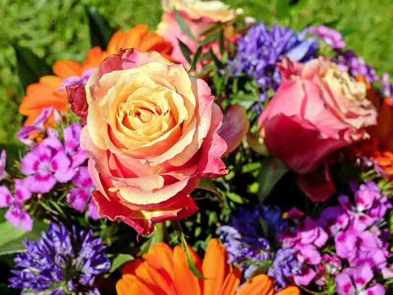 Backyard Bouquets: Growing a Cutting Garden