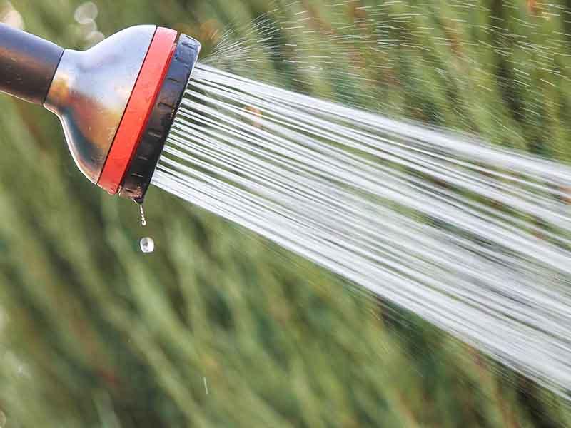 Watering 101