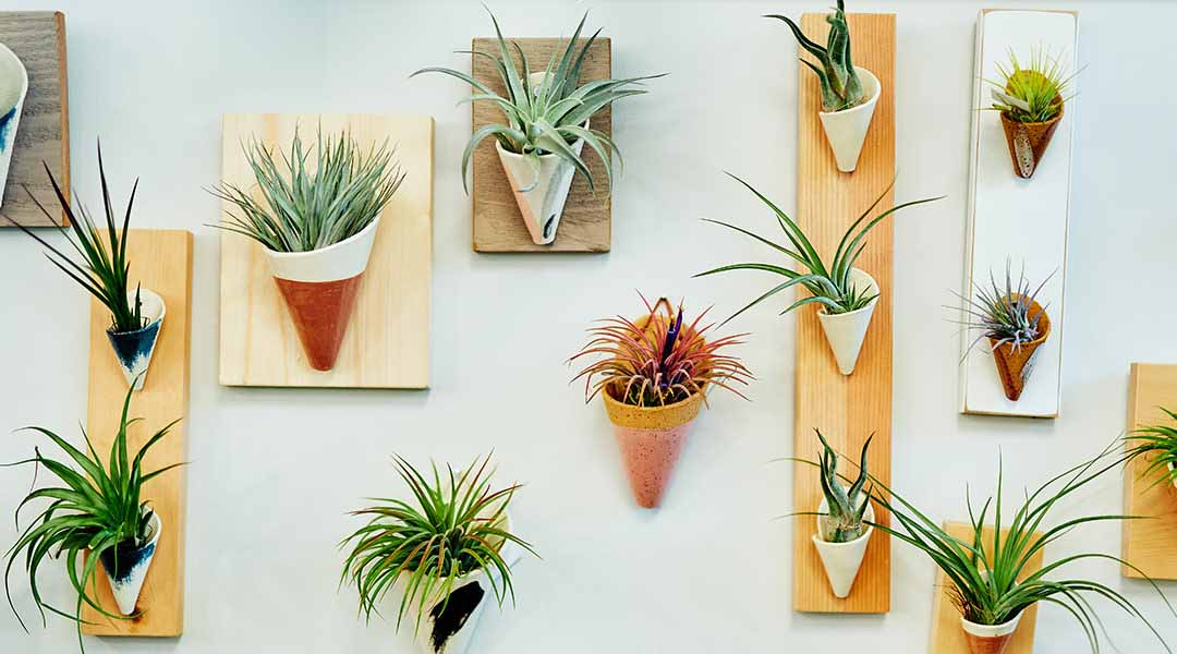 Become an Air Plant Expert